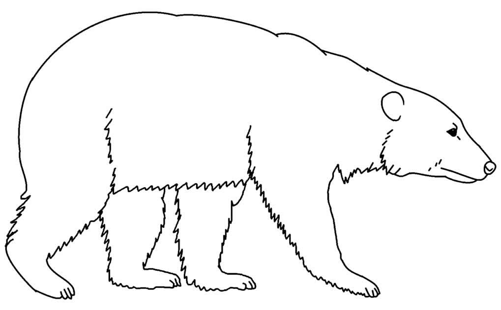 Desenhos de Urso para pintar