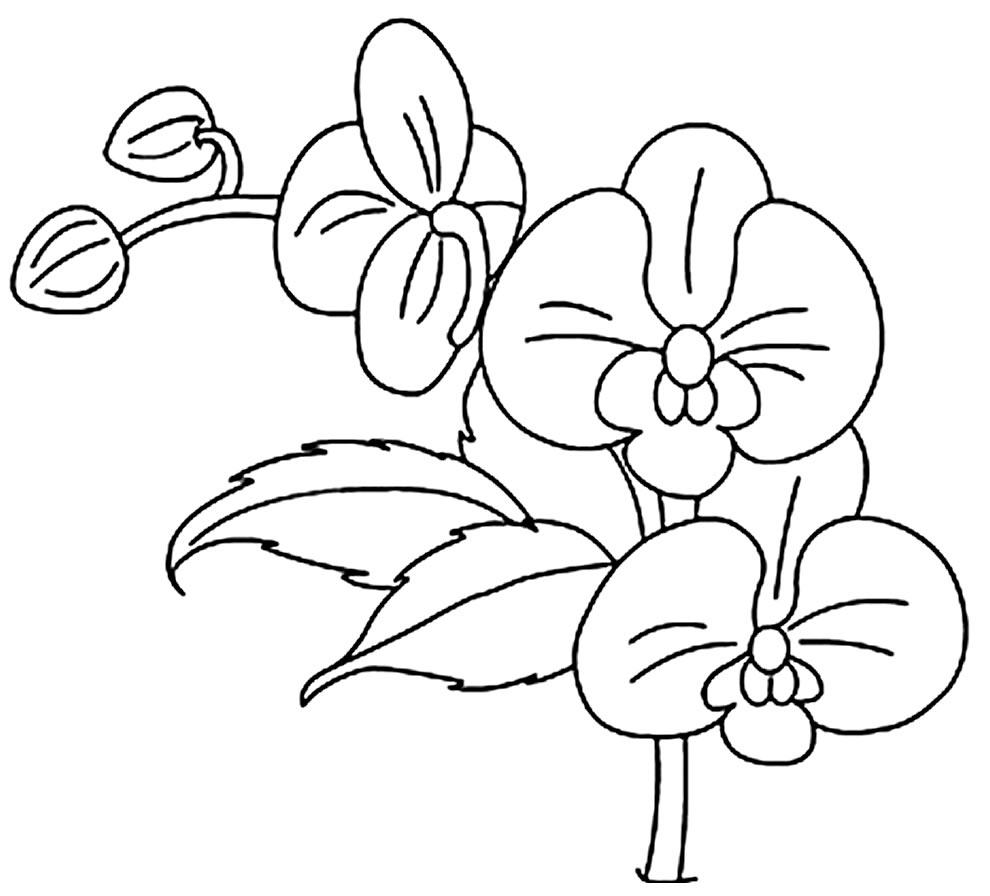 Imagem de Orquídea para colorir