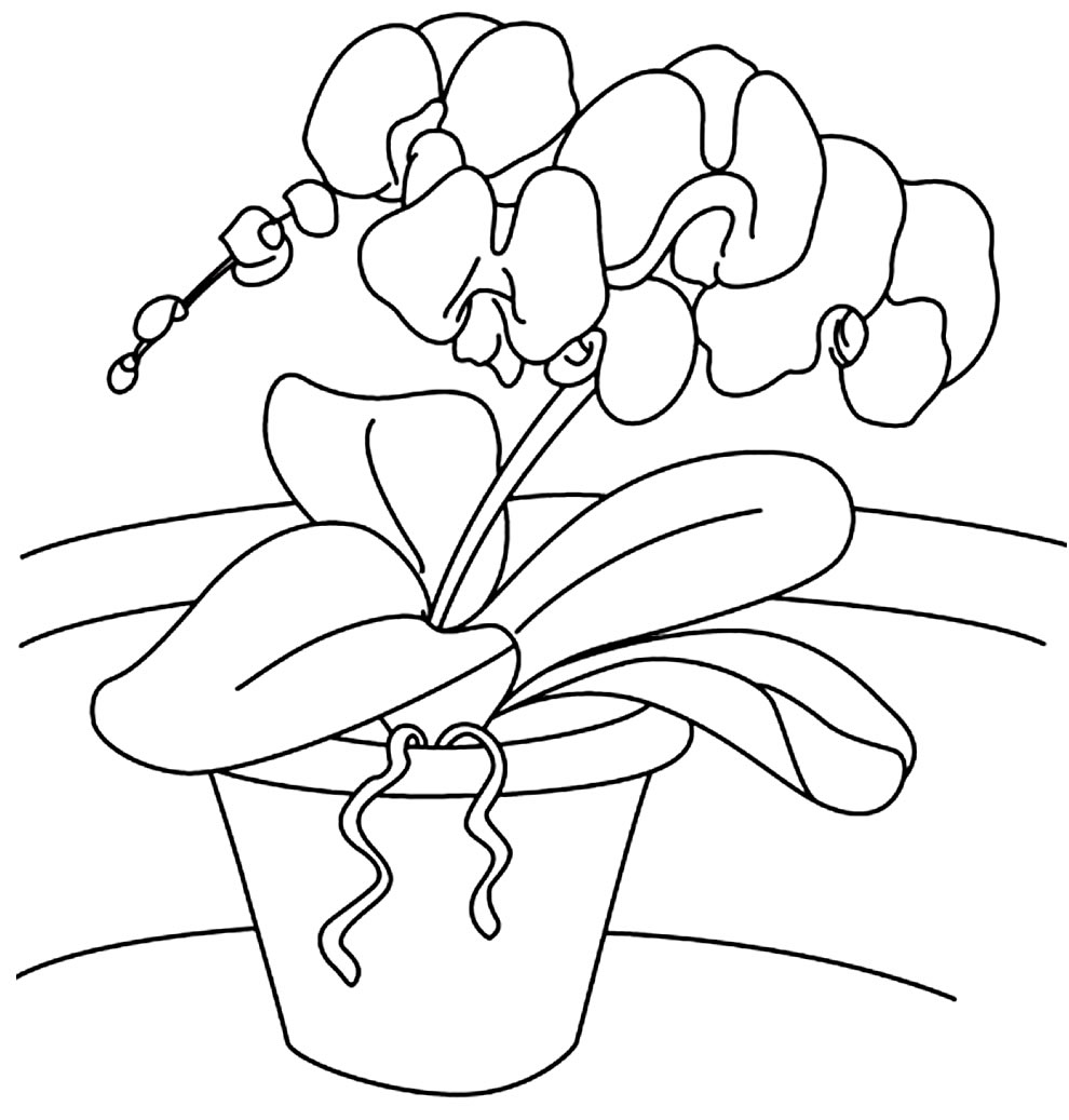 Imagem de Orquídea para pintar