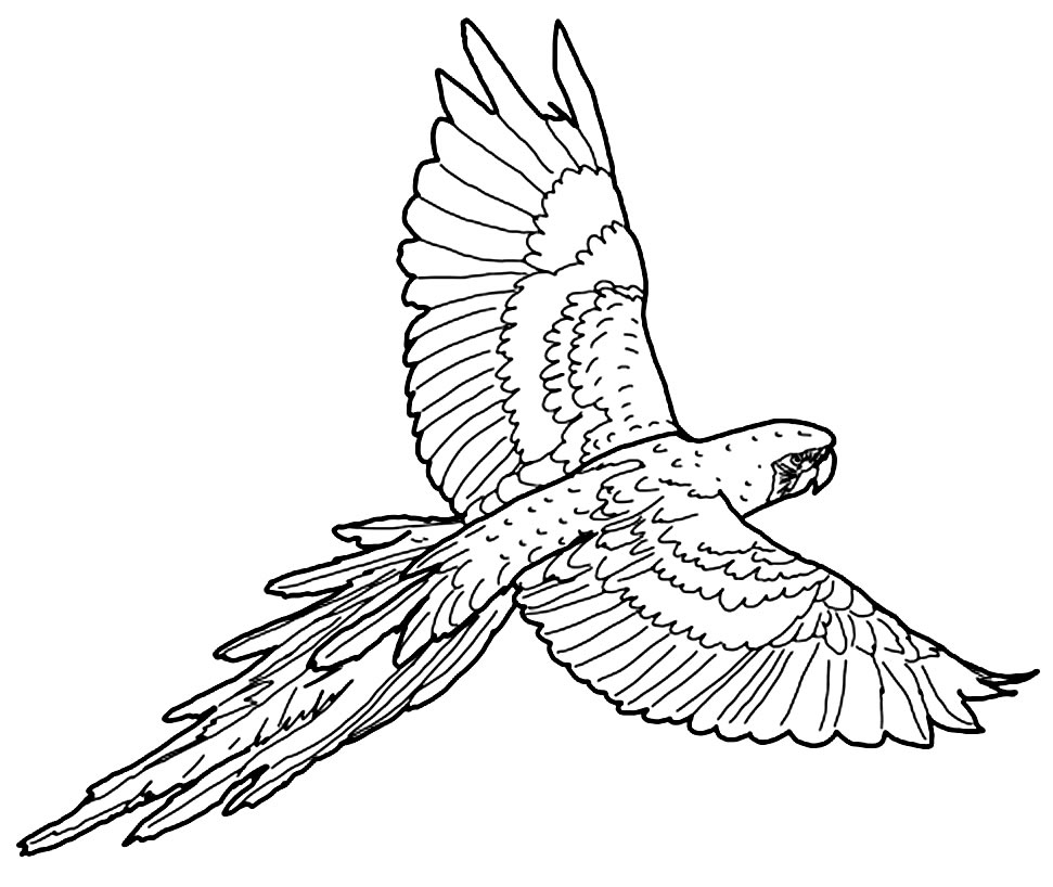 Desenho de Papagaio para colorir