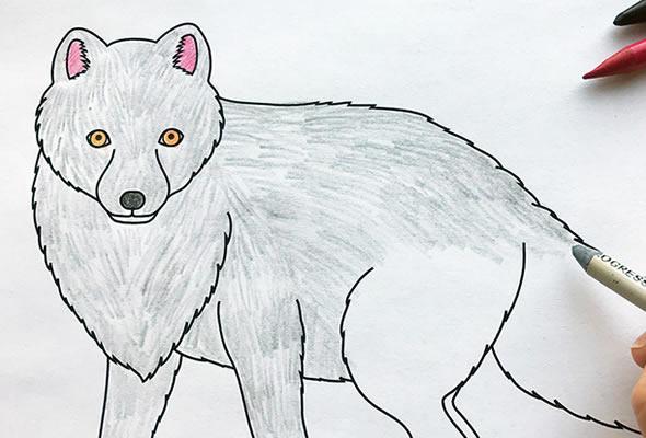 Desenhos de Raposa para colorir