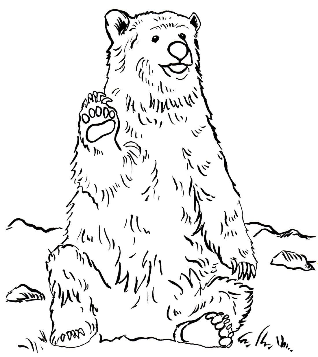 Desenho de Urso para pintar