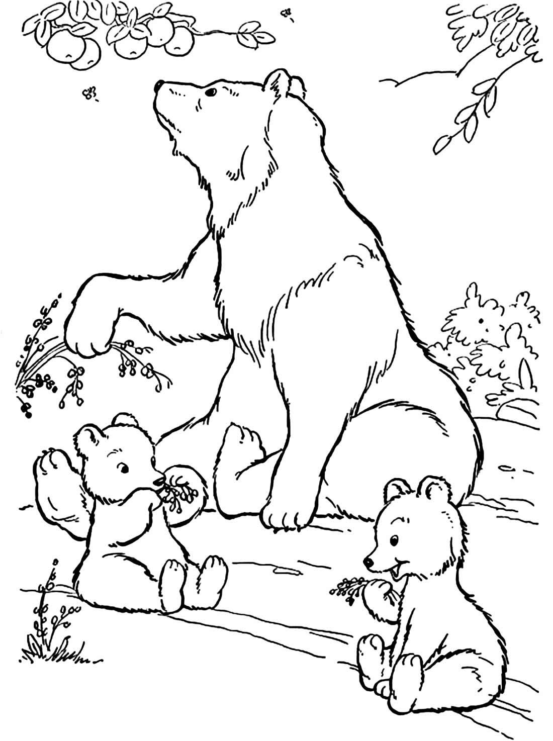 Desenho de Urso para colorir