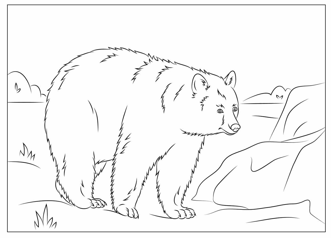Desenhos de Urso para colorir