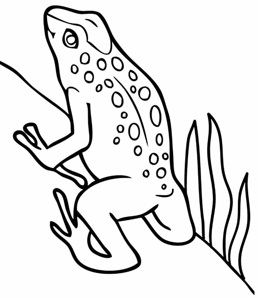 Desenho de Sapinho para colorir