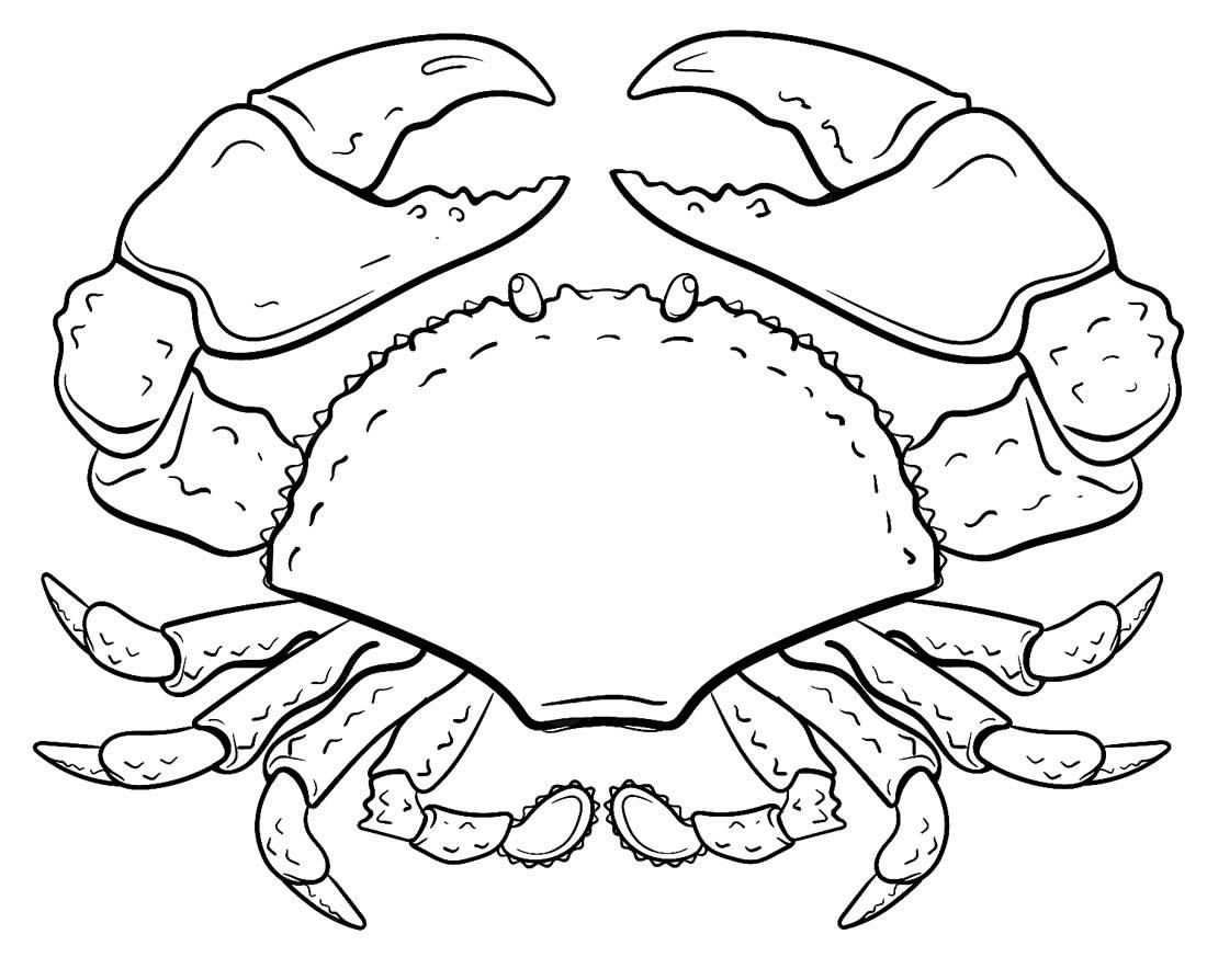 Desenho para colorir de caranguejo realista