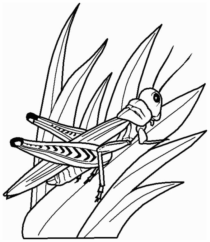 Desenho de Gafanhoto