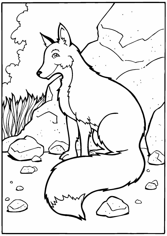 Lindo desenho de Raposa para pintar