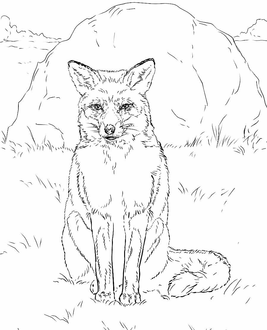 Lindo desenho de Raposa para pintar e colorir