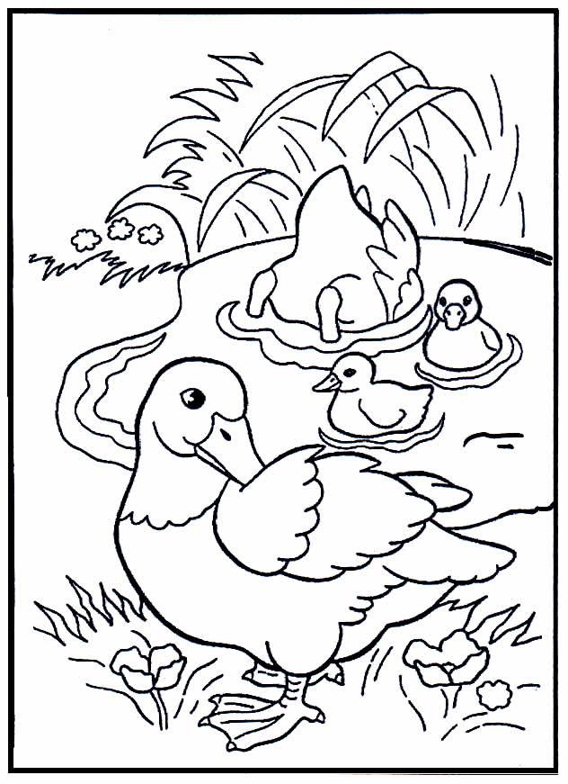 Imagem de patos para colorir