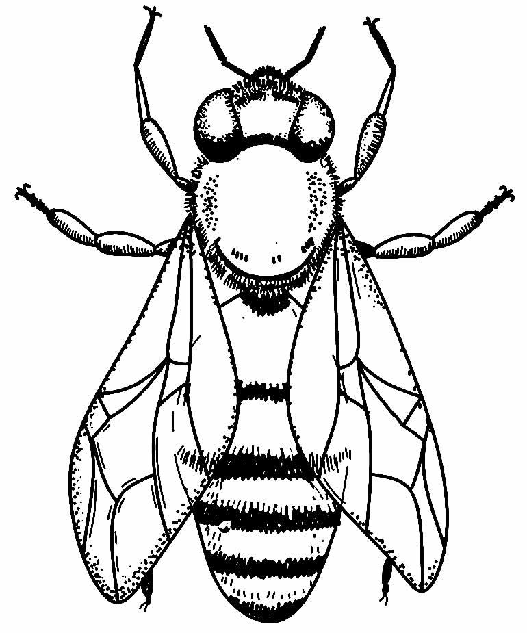 Desenho de mosca para pintar
