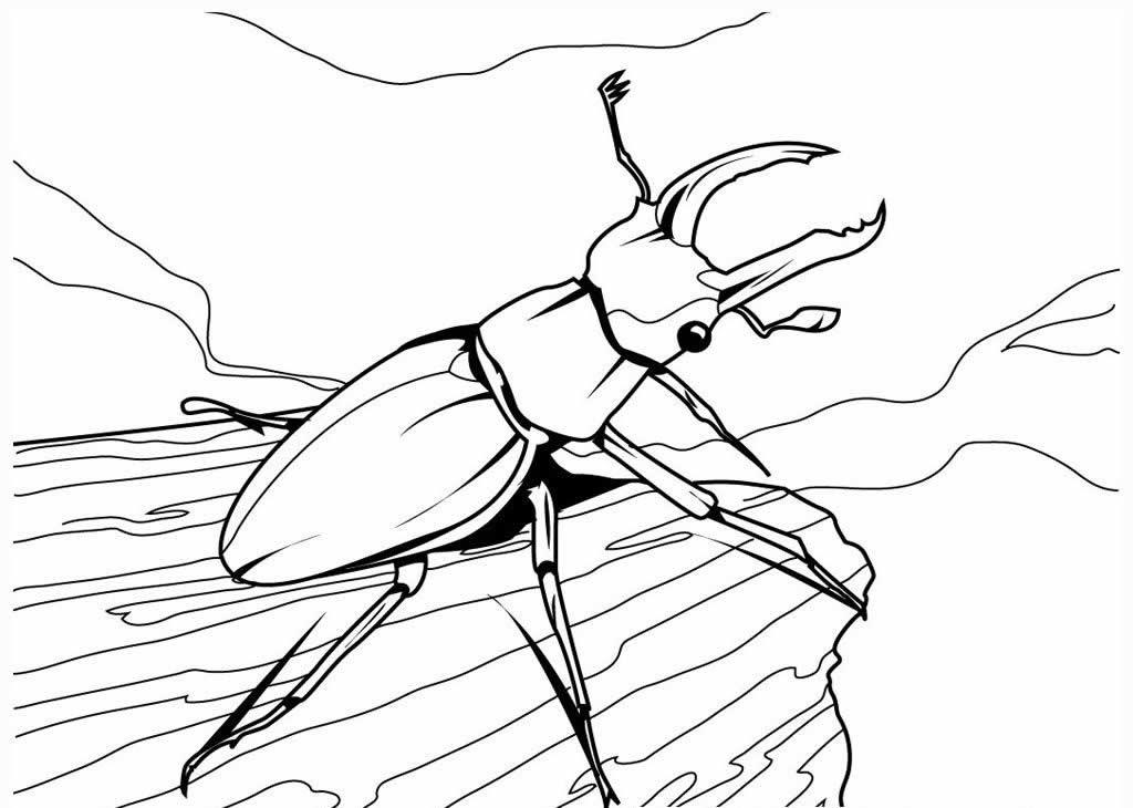 Desenho de escaravelho para pintar