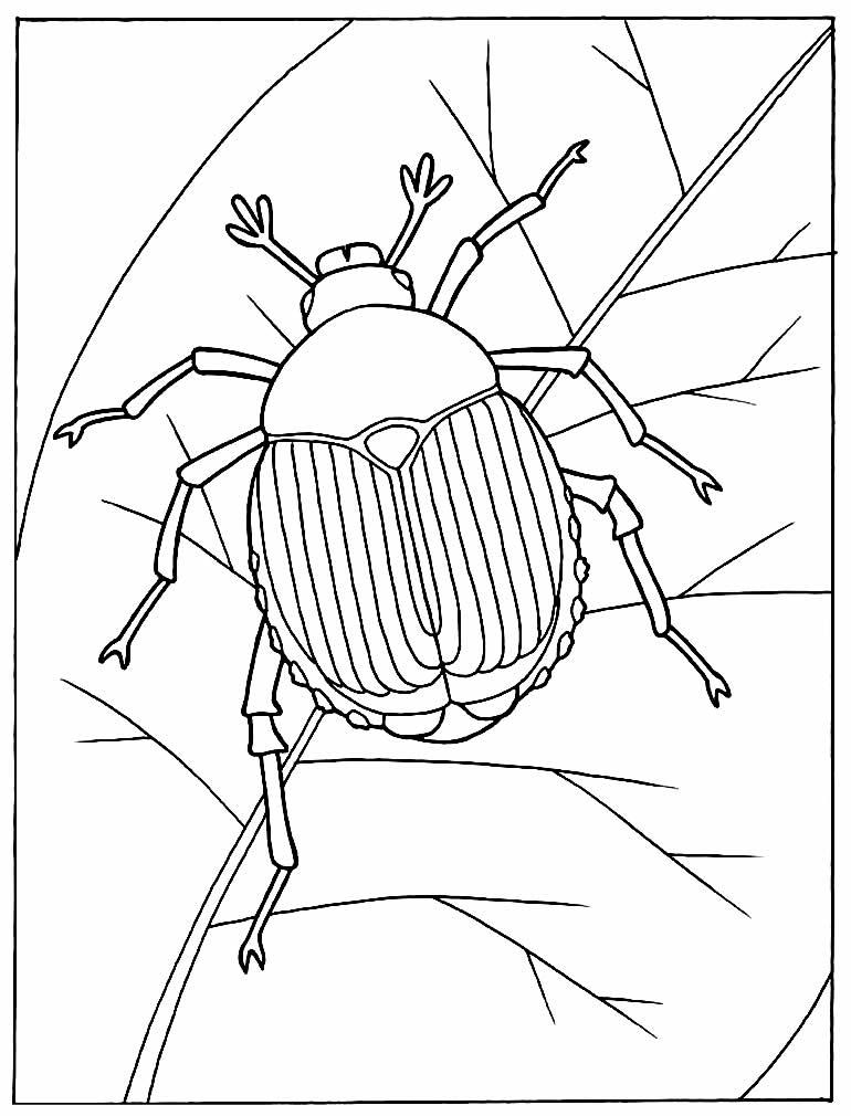 Desenho de besouro