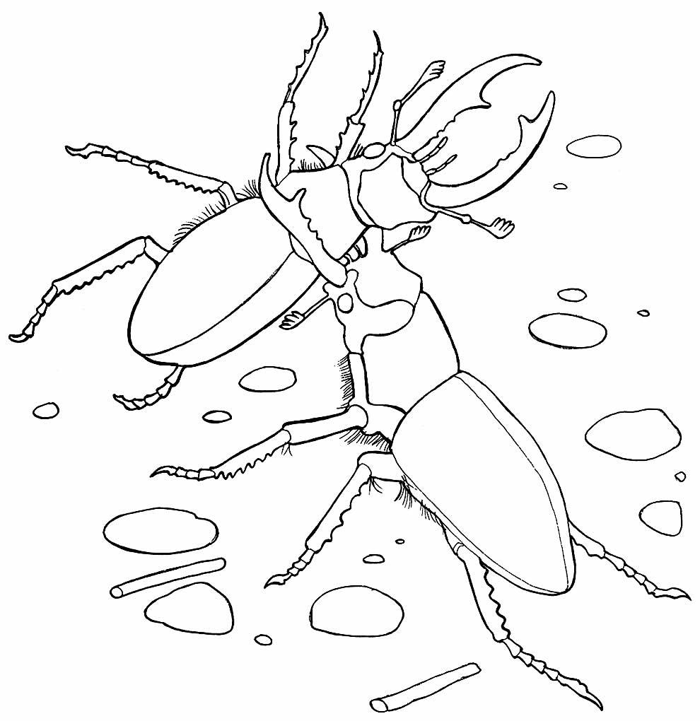Desenho de besouros para pintar