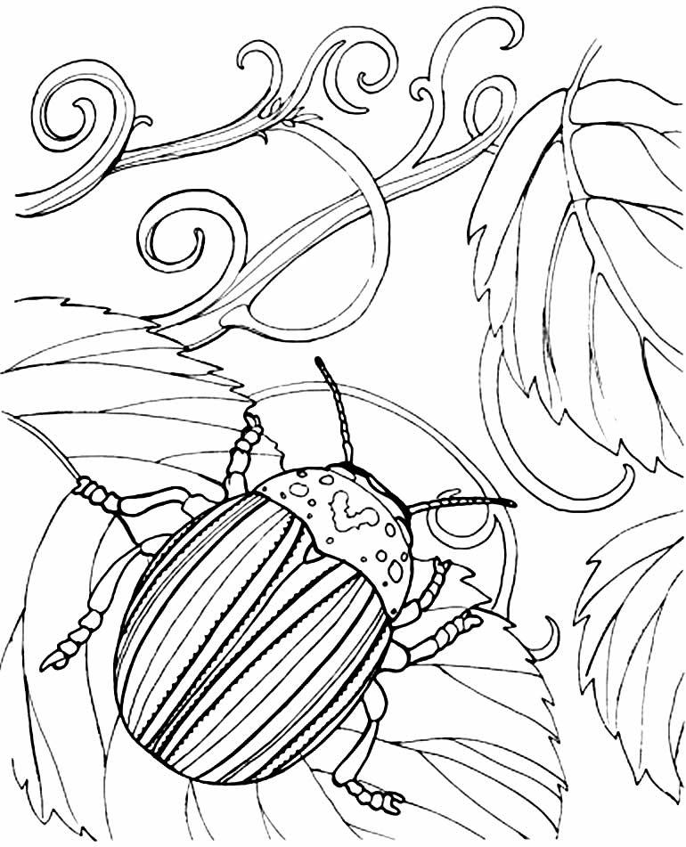 Desenho de besouro para colorir