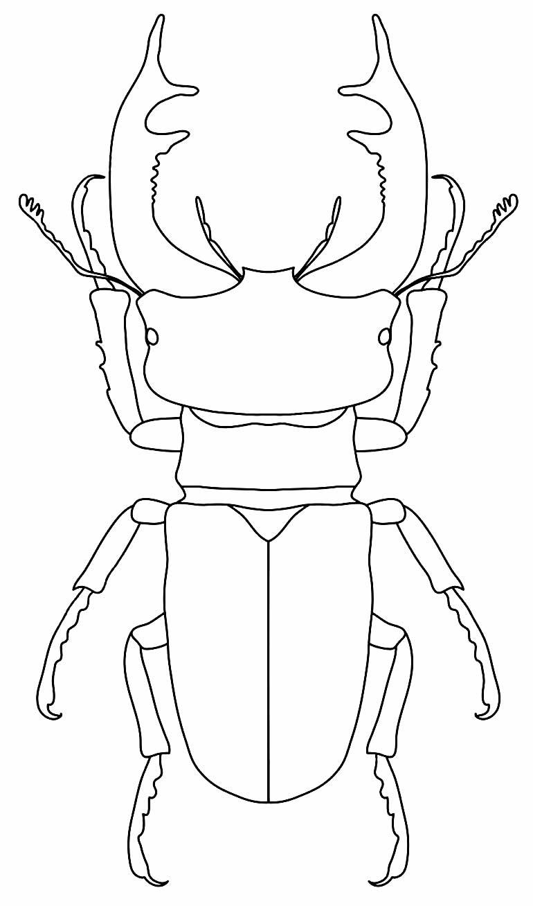 Desenho de inseto para pintar e imprimir