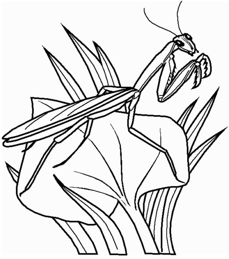 Desenho de inseto para colorir