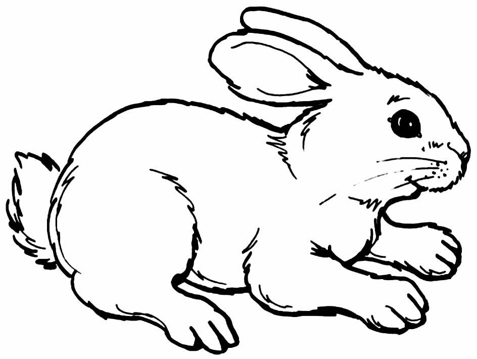 Desenho de coelhinho para pintar e colorir
