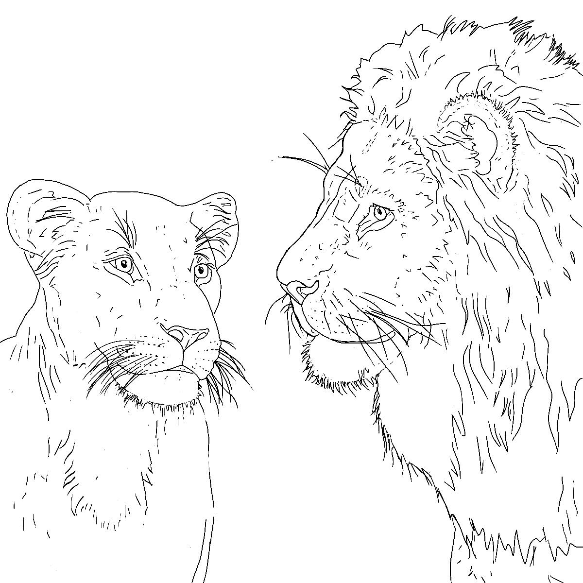 Desenho de Leão para imprimir e colorir