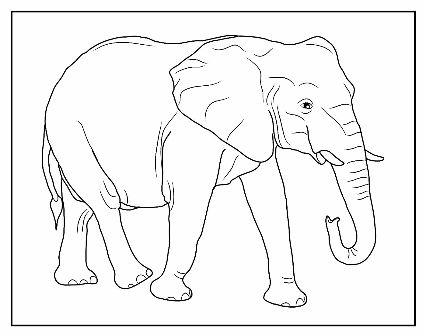 Desenho Elefante Colorir
