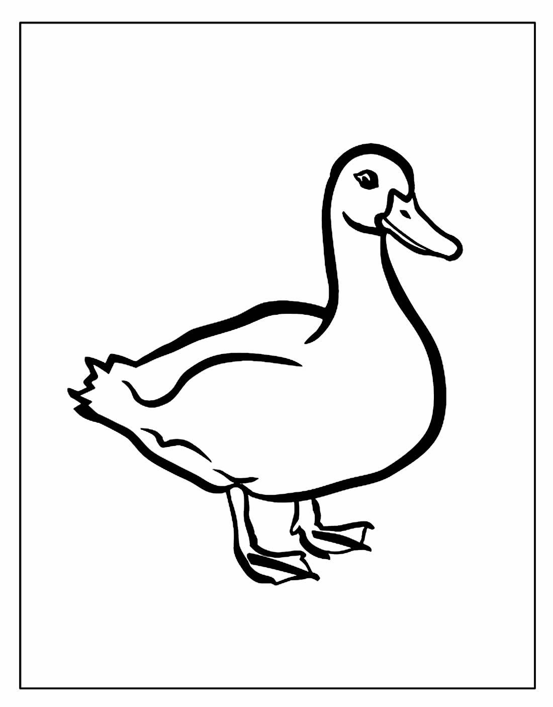 Desenho para colorir de Pato