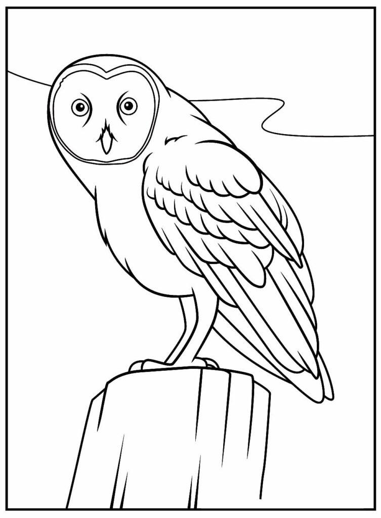 Desenhos Realista para colorir de Coruja